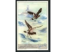 1963 - LIEBIG - LOTTO/18788 - UCCELLI OCEANICI